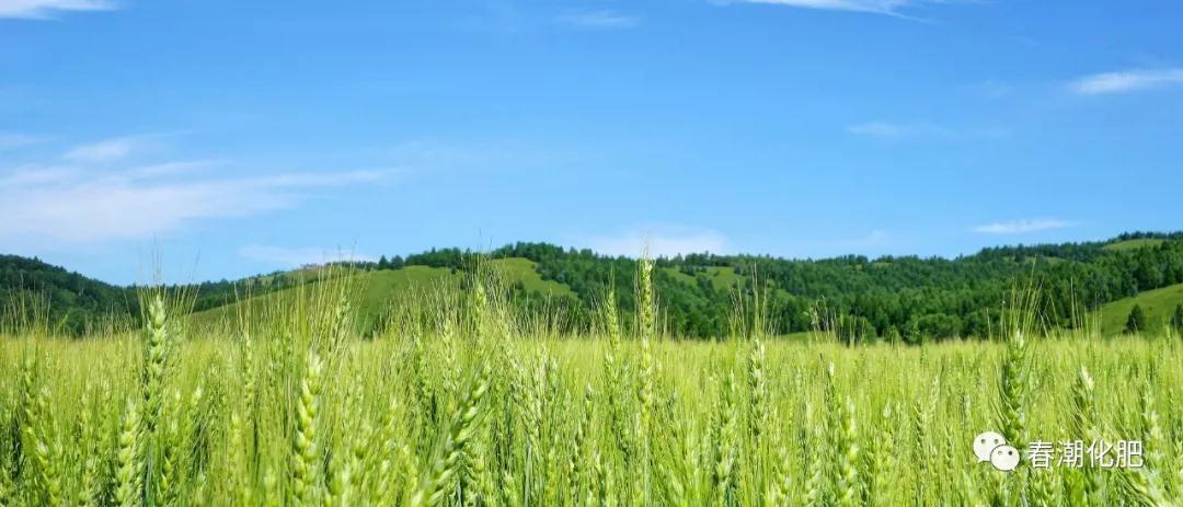 小麦全程施肥方案